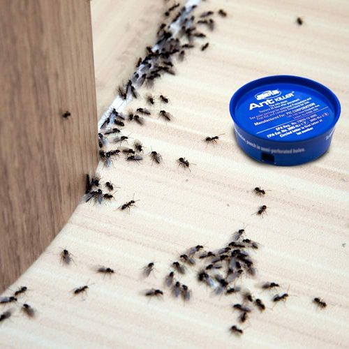 Home Plus Ant Killer 1