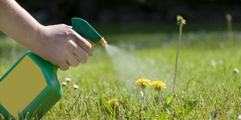 household product kills weeds 1